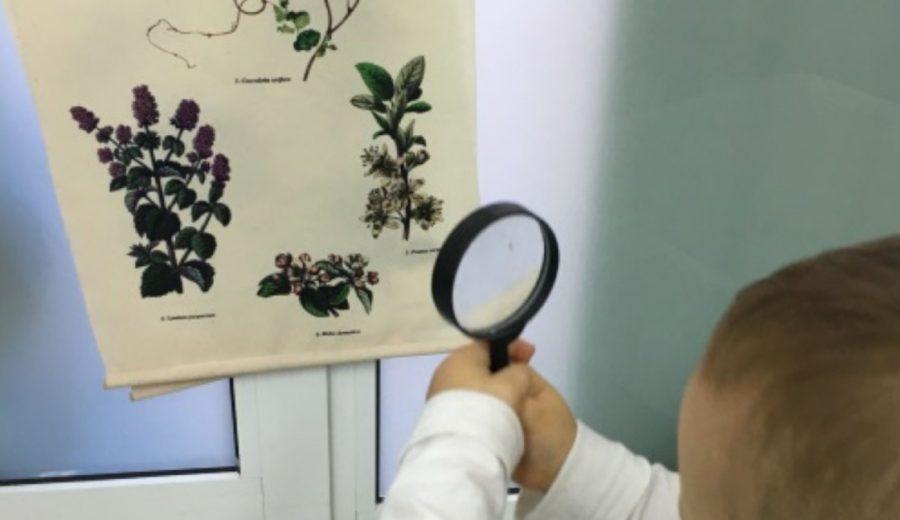 Ciència i natura a llars d'infants municipals Cavall de Cartró