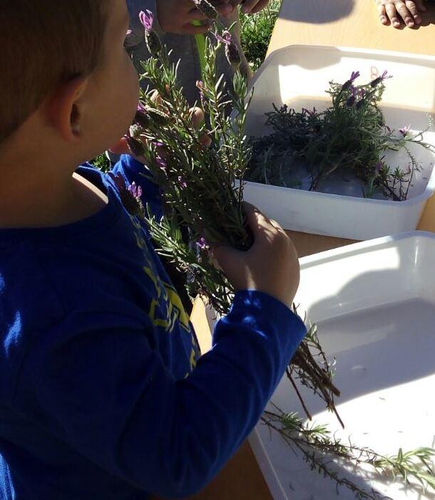 Herbes aromàtiques per Sant Ponç a la Petita Estelada de Cànoves
