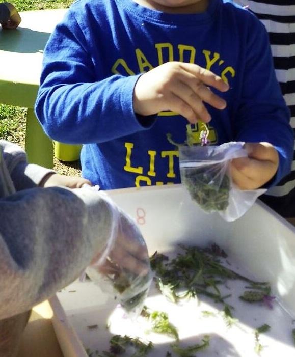 Activitats per Sant Ponç a la Petita Estelada de Cànoves