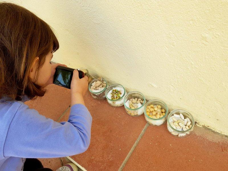 LLIM El Cargol Sant Pere de Ribes - Plantem llenties i cigrons