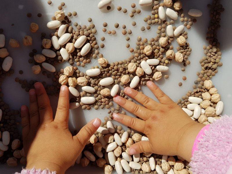 LLIM El Cargol Sant Pere de Ribes - Plantem mongetes i cigrons