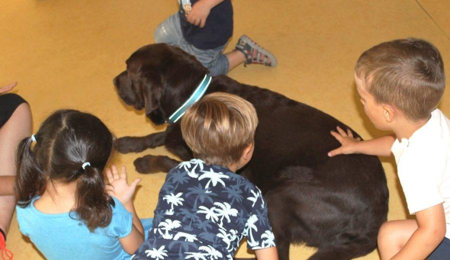 Teràpia acompanyament amb gossos EBM Gall Mullat de Piera 5