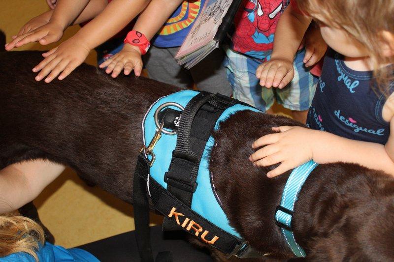 Teràpia acompanyament amb gossos EBM Gall Mullat de Piera